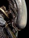 alien-palis